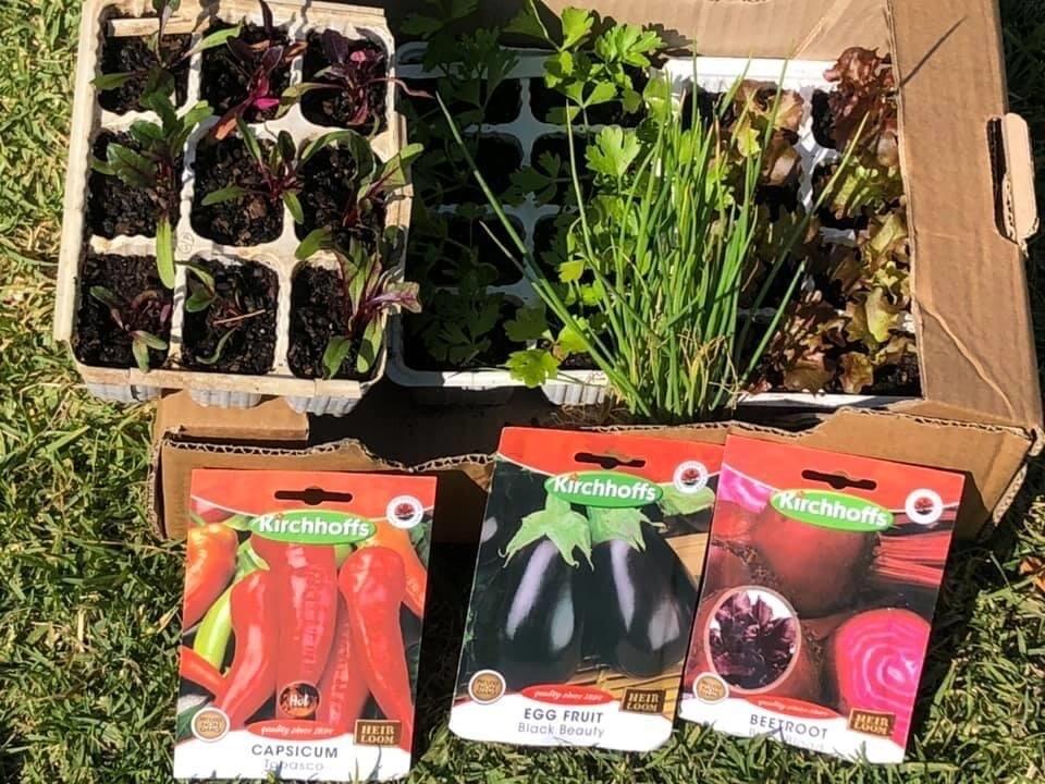 veggie garden starter kit