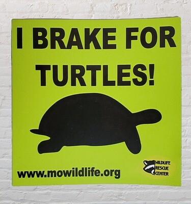 I Brake for Turtles Car Magnet