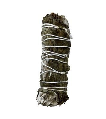 Sauge blanche californie & Menthe ficelle 20-25g 10cm