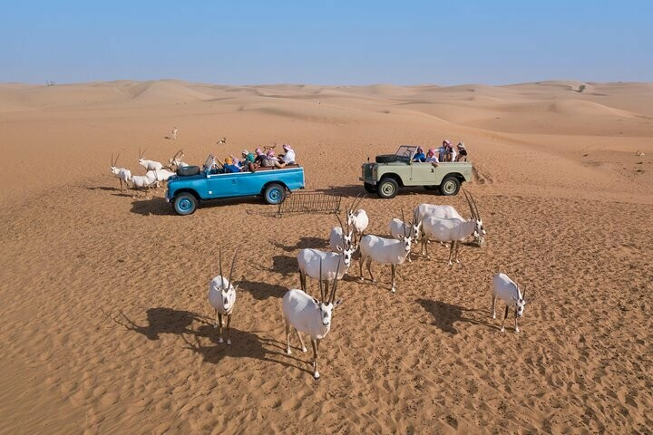 PREMIUM DESERT SAFARI + DINER 595 AED