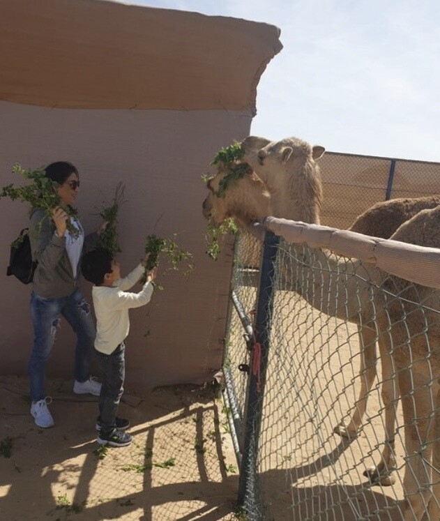 THE CAMEL FARM DUBAI 40 AED