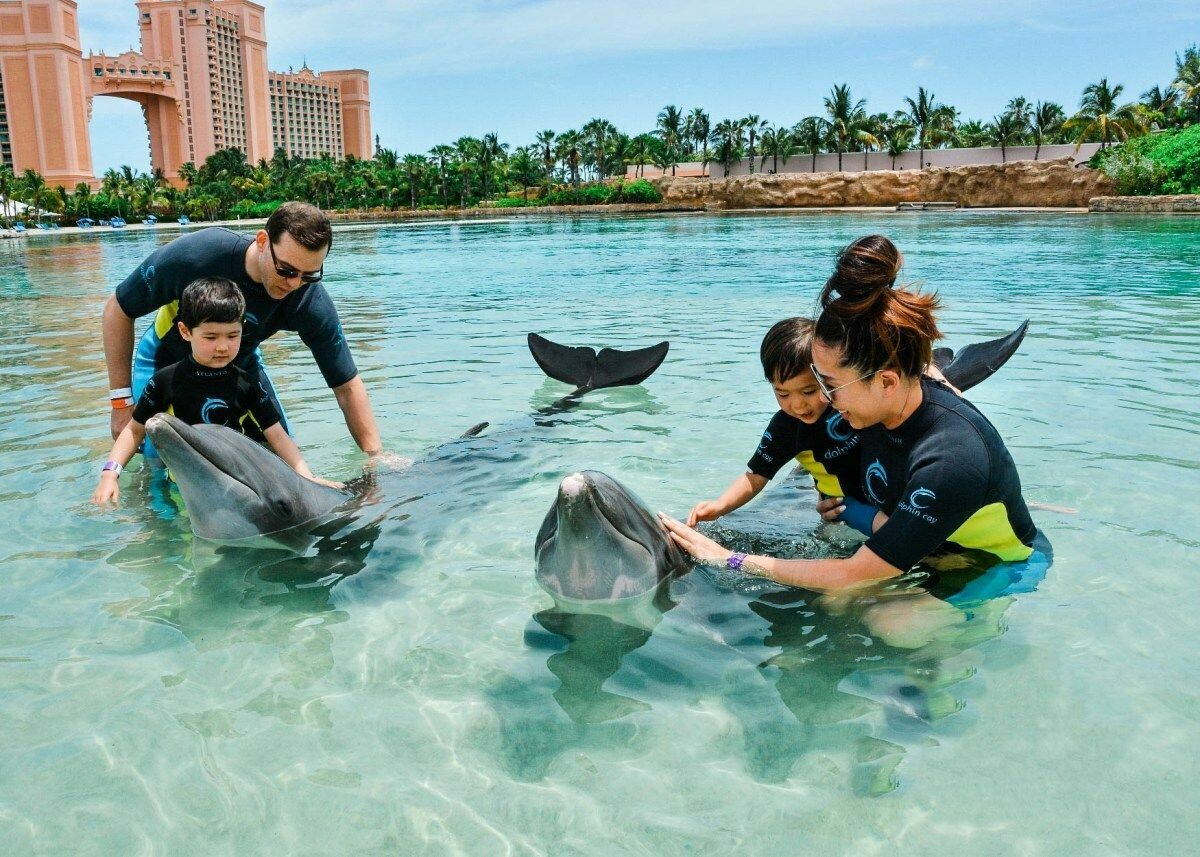 DOLPHIN ENCOUNTER & AQUAVENTURE 750 AED