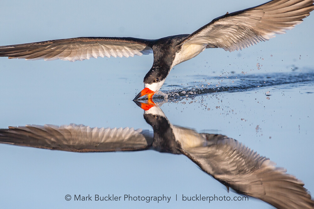 Special Guest Series- Extraordinary Bird Photography, with Mark Buckler