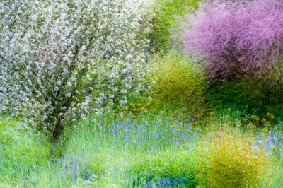 Special Guest Series- Impressionistic Photography with Charles Needle