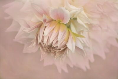 Special Guest Series- Flower Portrait Close-ups with Kathleen Clemons