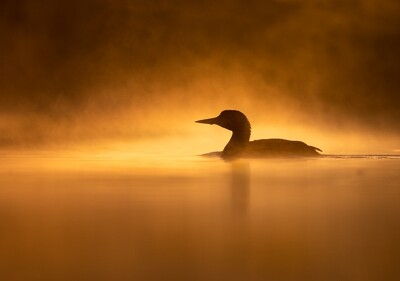 Special Guest Series- Creativity in Lighting for Bird Photography with Cameron Darnell