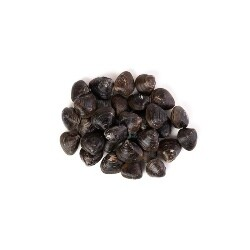 Almeja en concha X 450 Gramos Aprox