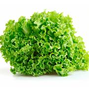 Lechuga crespa Verde X 1 UND Aprox 250 Grs UND