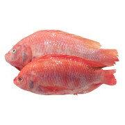 Mojarra Roja con escamas 3/4 - Pescado X Kilo