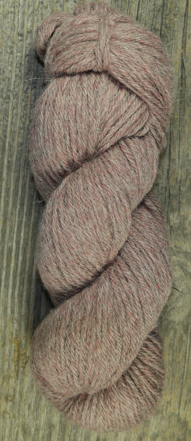 Rapture by Sugar Bush - Colour ravishing Rose