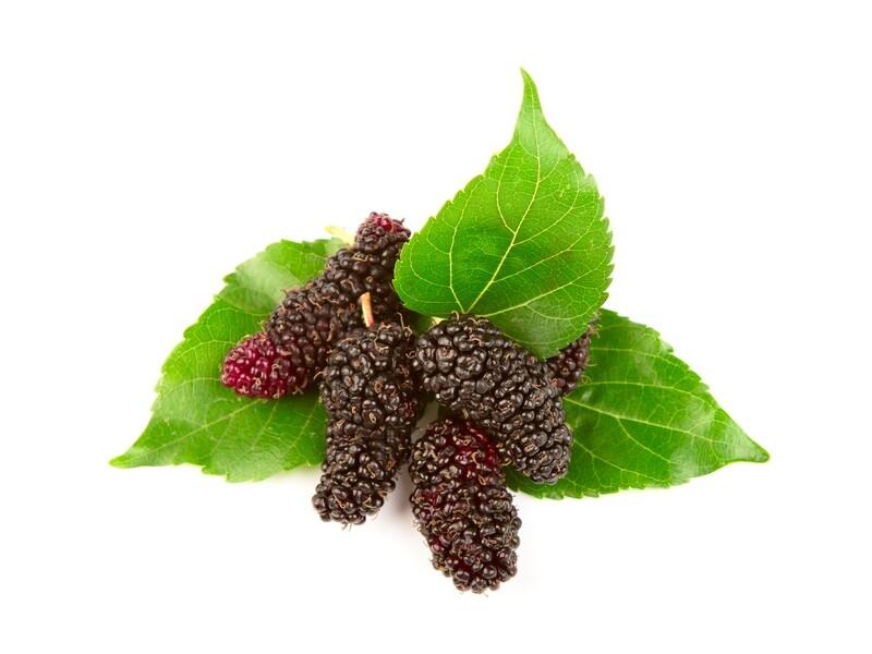 תות עץ שחור