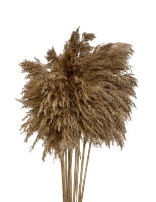 "28"" Reed Grass"