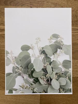 Seeded Euc Print