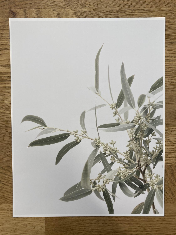 Seeded Willow Euc. Print