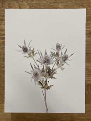 Thistle Print