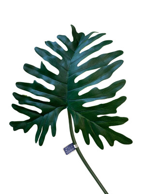 "29"" Extra Philo Leaf Spray GR"