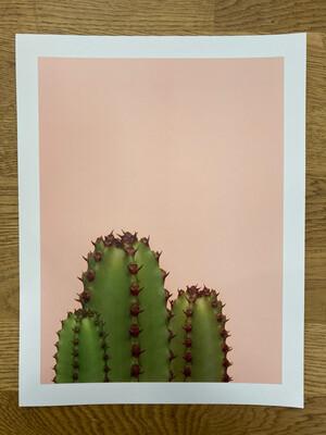 Cacti Trio Print