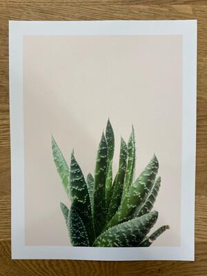 Zebra Cacti Print
