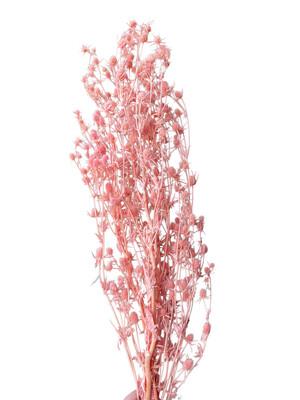 Dried Eryngium - Pink