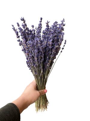 """16"""" Lavender Super Blue"""