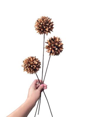 Wild Allium Natural