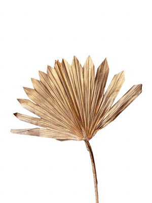 Palm Sun Gold Size 3