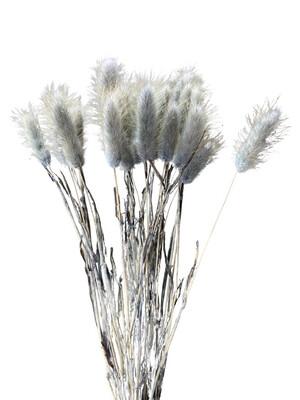 Dried Bunny Tails - Dark Grey