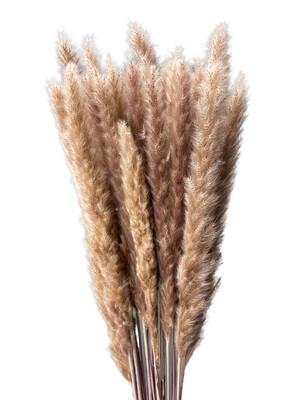 Pampas Grass Mini - Natural
