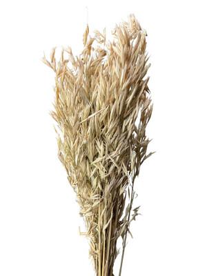 Dried Oat Grass