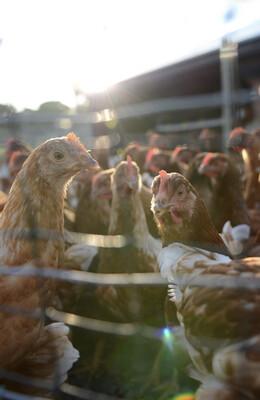 OUR OWN - Cage Free Eggs - Dozen