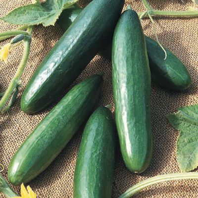 OUR OWN - Cucumber - Slicing