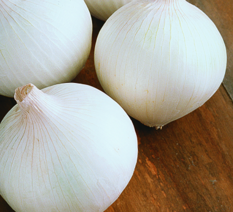 White Onion - 4 Pack