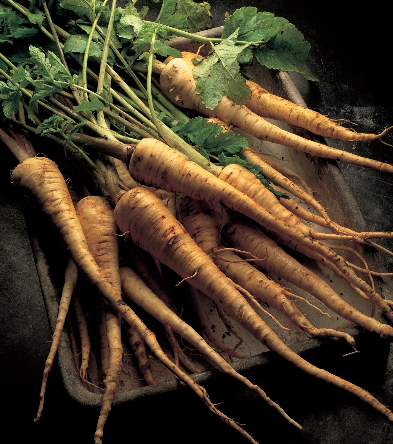 Parsnips - Bunch