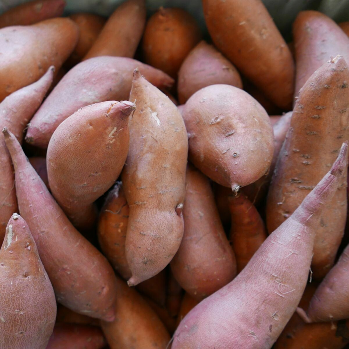 Sweet Potatoes - 5 Lb Bag