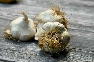 Garlic - 3 Pack