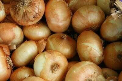 Yellow Onion - 4 Pack