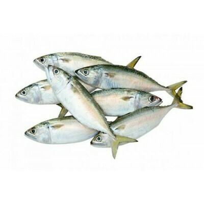 Baby mackerel (Ayala)