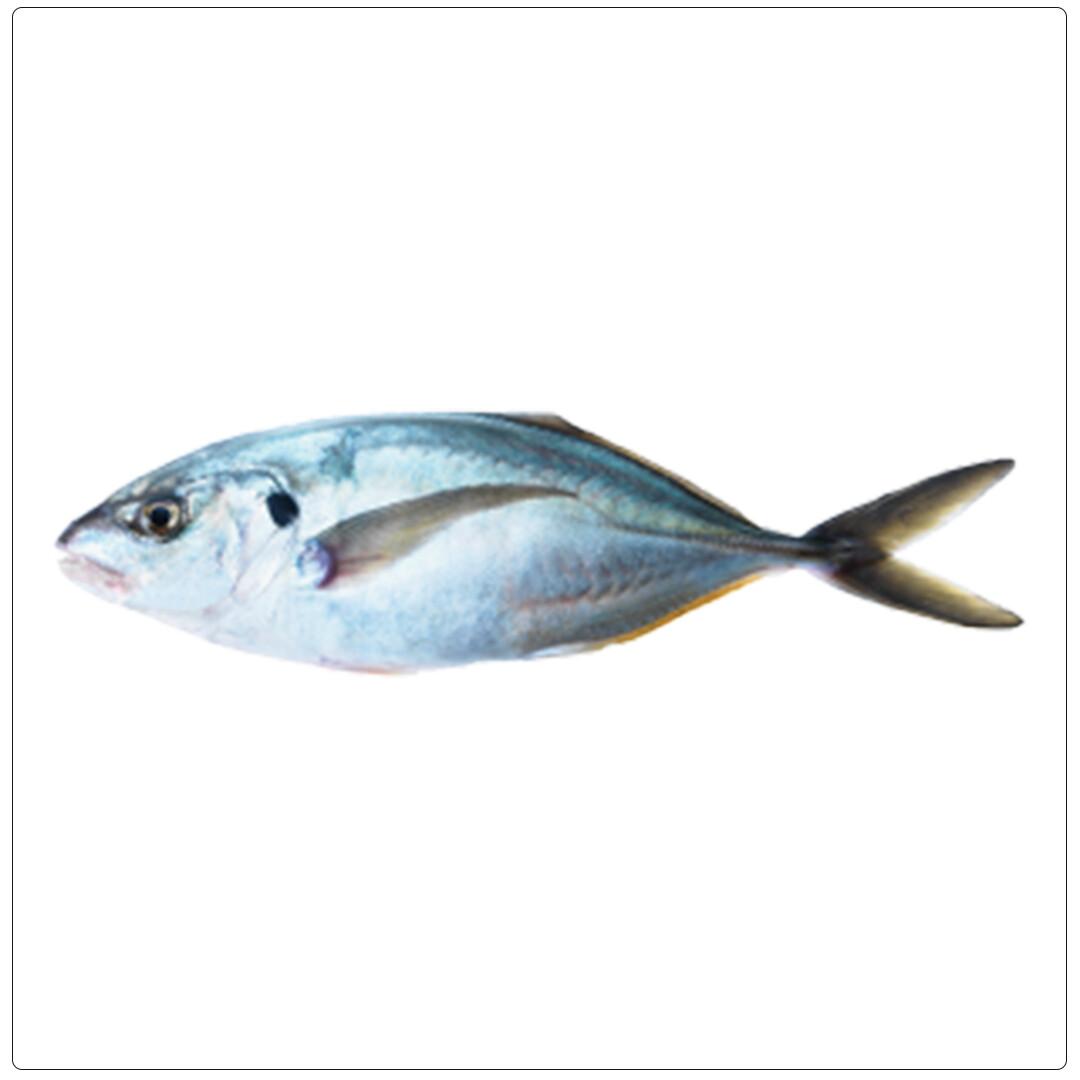 HAMAM WHITE SMALL(Per kg)