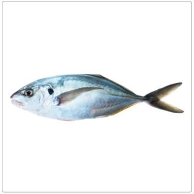 HAMAM VATTA(Per kg)