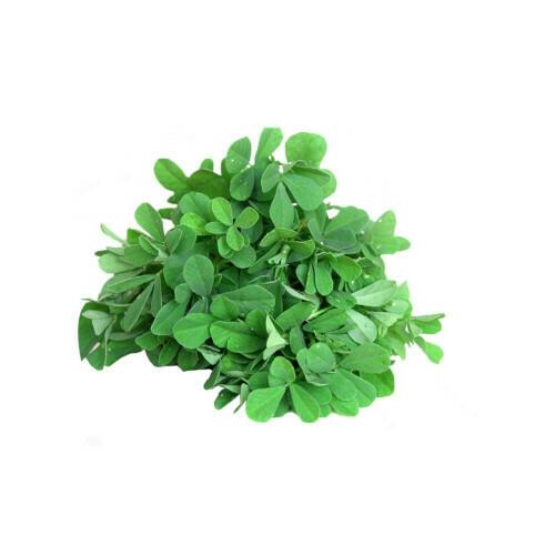 Fenugreek (Methi ) Seeds (10 seeds)