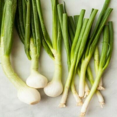 Spring Onion Seeds (10 seeds)