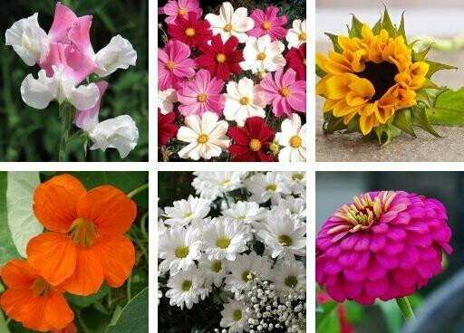 Wedding Flowers Seeds Pack