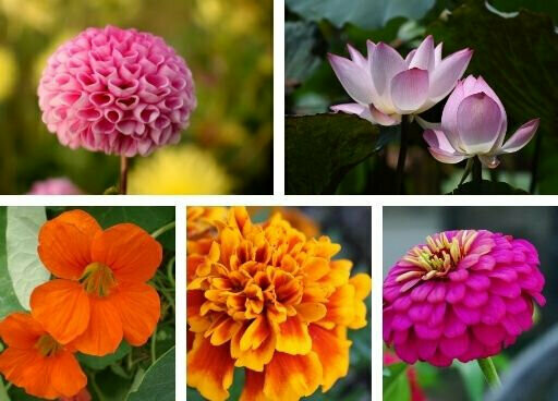 Easy to Grow Flowers Seeds Pack