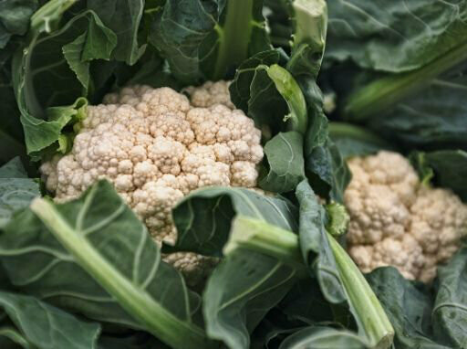 Cauliflower Seeds (10 seeds)