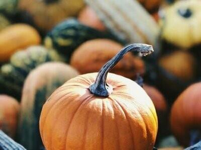 Pumpkin Seeds (3 seeds)