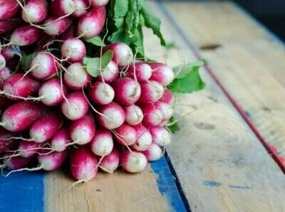 Turnip Purple Top Seeds (5 seeds)