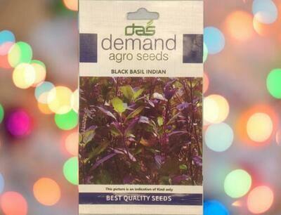 Demand Agro Basil Black Indian