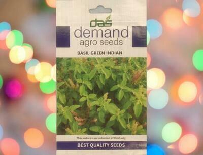 Demand Agro Basil Green Indian