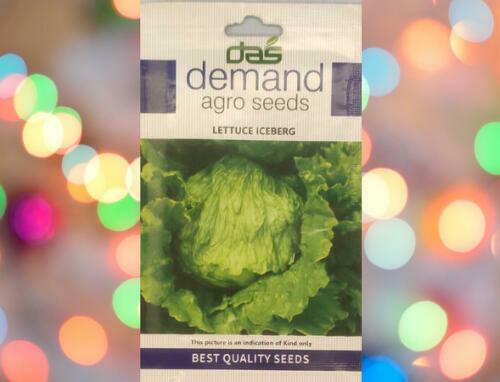 Demand Agro Lettuce Iceberg