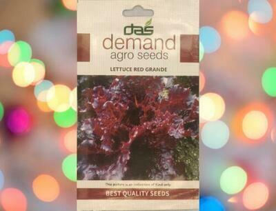 Demand Agro Lettuce Red Grande
